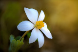 plants__flowers