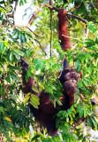 Mammals on Borneo 2018
