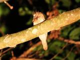 Birds on Borneo  2018