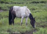 Chincoteague Horses -0116.jpg
