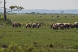 Chincoteague Horses-0076.jpg