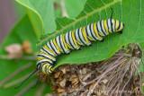 Butterflies (60+)