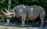 rhino full body