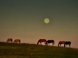 moon behind horses