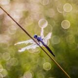 torn wings