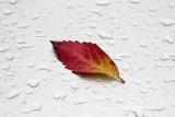 late September rain