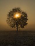 a tree's heart