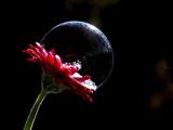 bubble on flower