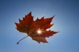 autumn aperture