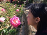lay_les_roses