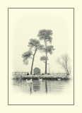 Aireyholme pond