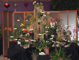 20182088  -  Exhibit  'Anne's  Asian  Dream'  ST/AOS  (83  points)  3-10-18  (Illinois  Orchid  Society)