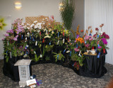 20182094  -  Exhibit  'Oriental  Cascade' ST/AOS  (83  points)  3-24-18  (Illowa Orchid Society)