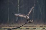 D4S_6963F zeearend (Haliaeetus albicilla, White-tailed Eagle).jpg