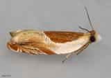 Ancylis laciniana #3366