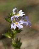 fleurs__flowers
