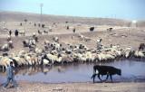 Urfa 1997 Desert tour 110.jpg