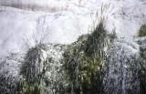 Pamukkale cliffs vegetation