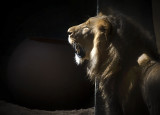 King of the BioPark