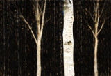 Napa Birch