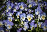 Spring Choir