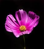 Maisie's Favorite Garden Flower