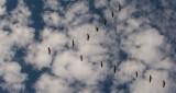 The Cranes Return