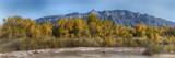 Albuquerque Special - The Sandias and Octobers' Cottonwoods