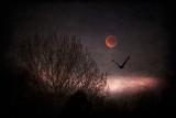 Moon flight 2