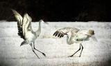 Bosque Ballet