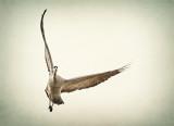 Free Wheeling Flight