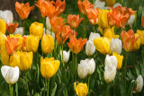 Spring Color!
