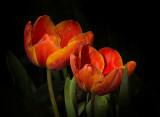 Richness of Spring