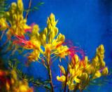 Carnival Blossom