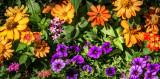 Maisie's Garden