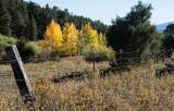 Truchas Autumn