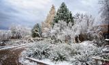 It Was a Wonderland Scene - First Snowfall
