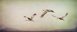Crane Family Takes Flight