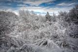 Corrales, NM Snowfall