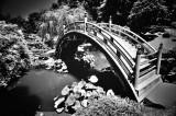Japanese Garden Bridge #2