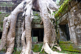 Tree roots cover a historic Khmer temple