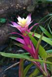 Thai Flora 2