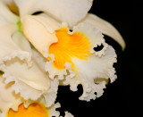 Orchid 021