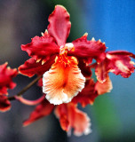 Orchid 045