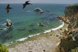 Pelicans Soaring off the Cliffs