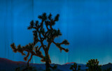 Joshua Tree Night