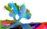 Joshua Tree 8184color