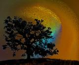 Tree-2314-SMtree2940B