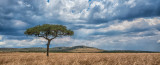 Kenya's Vast Plains