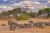 Wildebeest at Rest